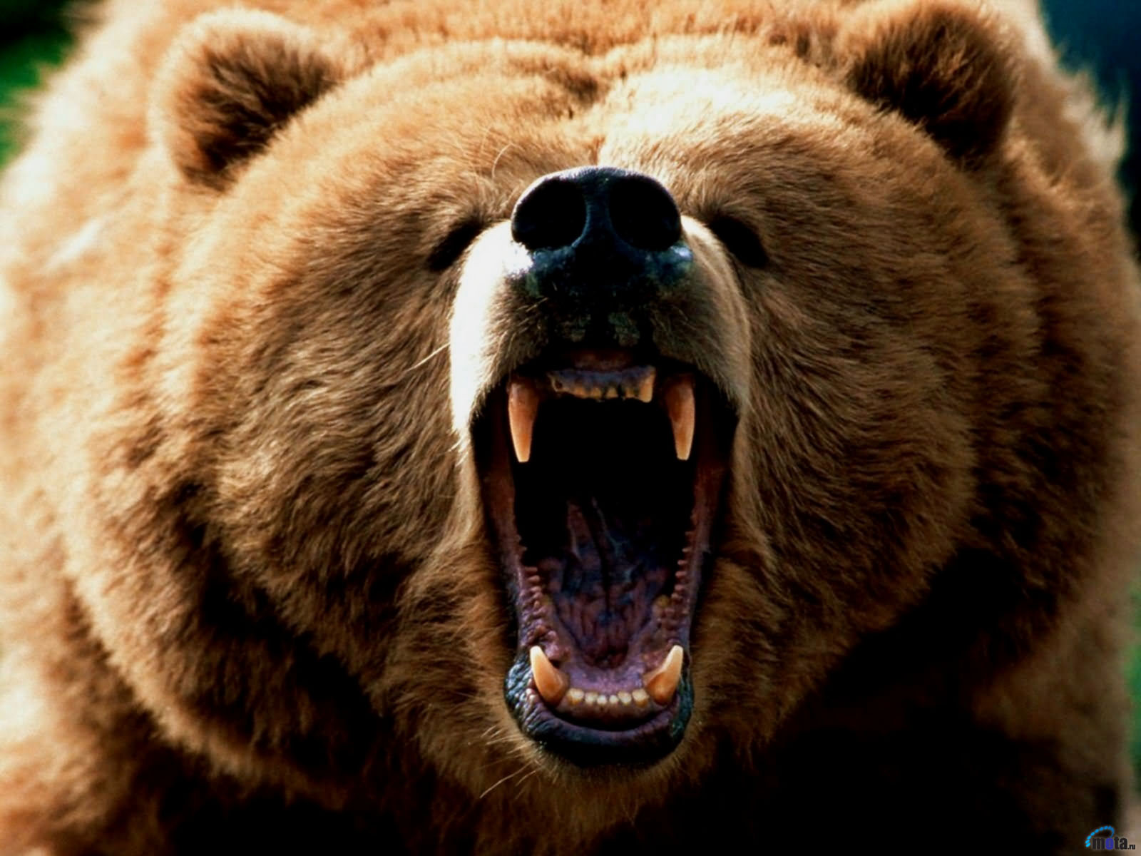 """the idea of the connection with bears and disconnection with society in grizzly man a film by werner The lieutenant of inishmore as well as looking at the play in his book the troubles explains this connection in discussion in werner huber""""s."""