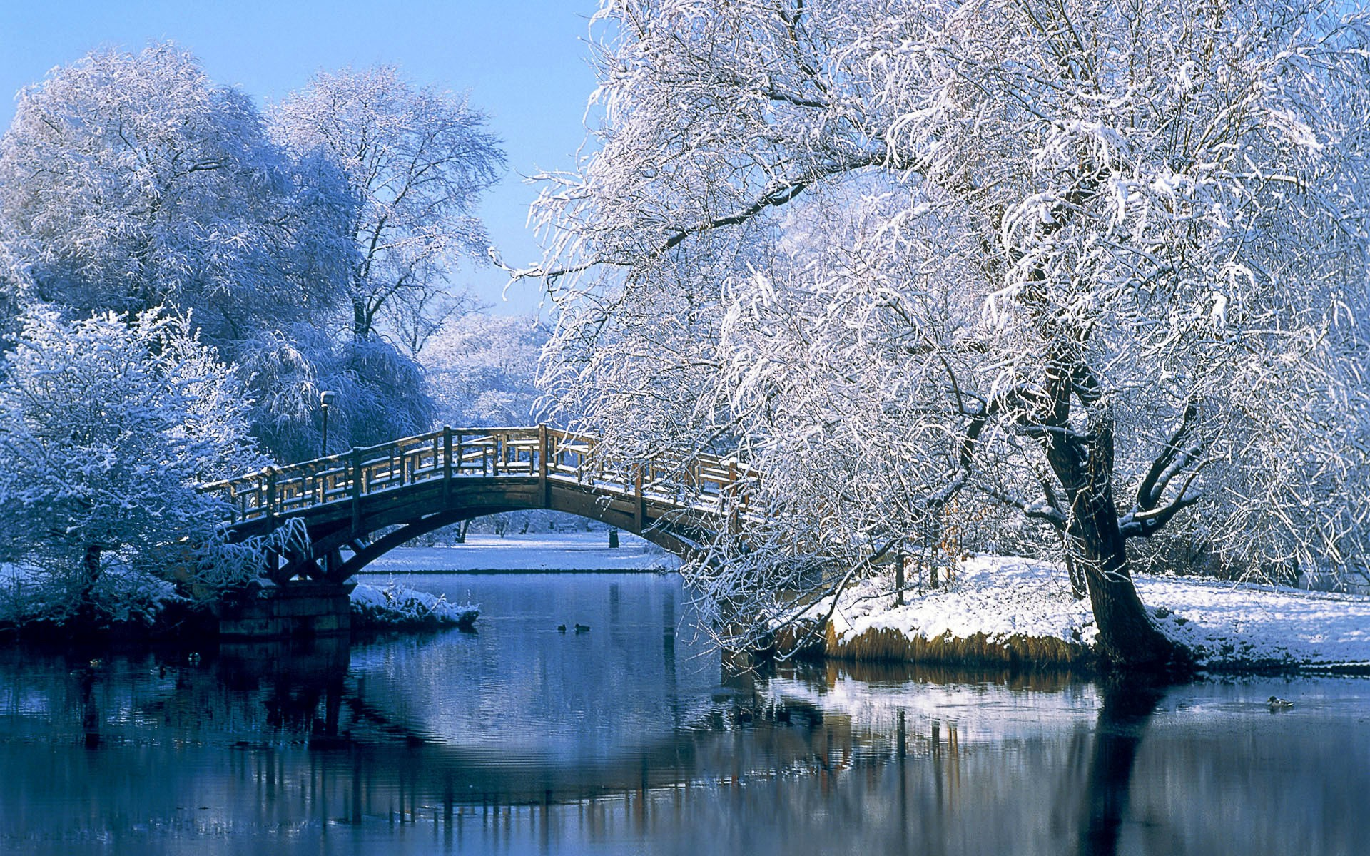 sad in the winter essay A sad but true christmas tale english literature essay print reference this the setting for the christmas carol was in the winter in england in london.